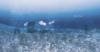 Kiki_Land_Under-The_Sea8.png